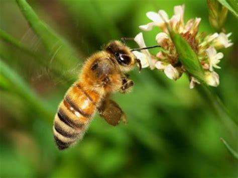 film larva buatan dunia tumbuhan dan hewan lebah