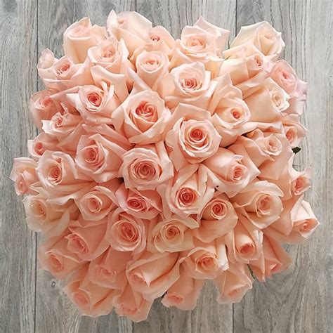 Order Roses by Order 50 Pink Roses In Miami Same Day Delivery