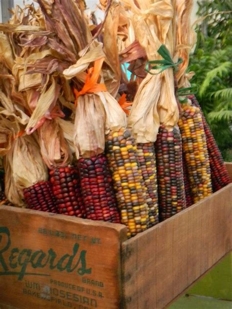 indian corn decorations for fall indian corn autumn