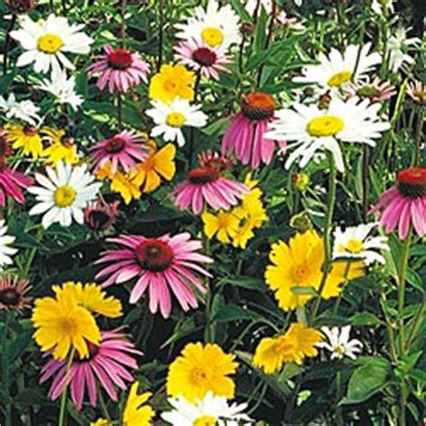 flower garden seed selections for shady areas