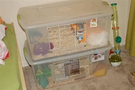 diy bin hamster cage diy bin cages for small animals hamster cages small animals animal and hamster