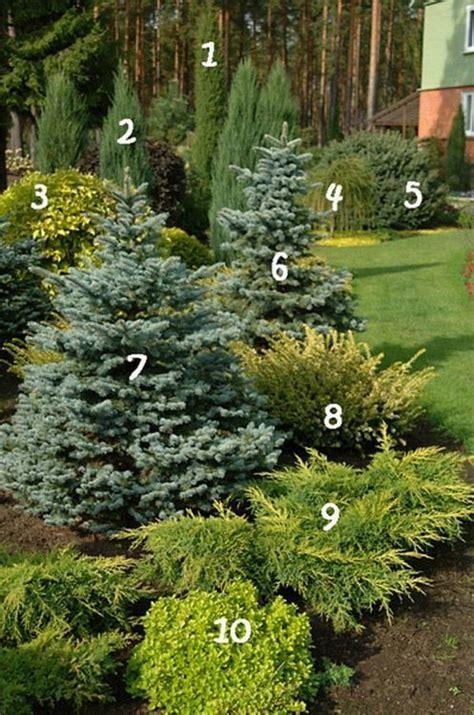 Landscaping Ideas Evergreen Shrubs Best 25 Evergreen Landscape Ideas On Privacy