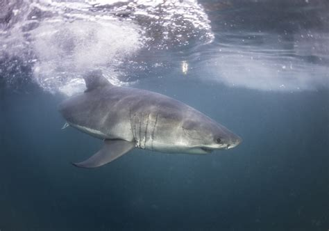 dive with sharks in south africa fly fighter jets more the thrill seeker s bucket list top 50 adrenaline rushes