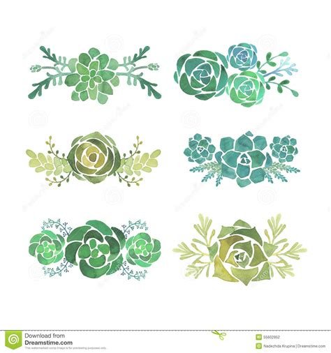 succulent clip watercolor clipart succulent pencil and in color