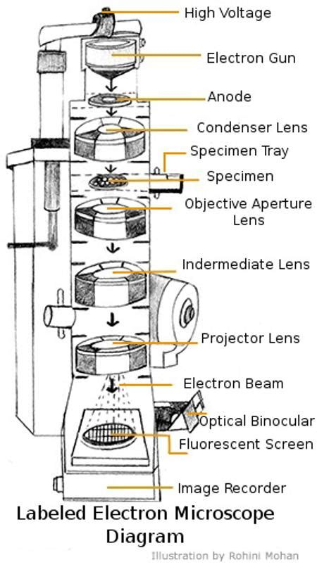 diagram of electron microscope a study of the microscope and its functions with a labeled