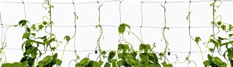 what is a climbing plant netting ground cover and bed mulches hortech solutions