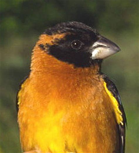 question of the day are these birds toxic drawing the