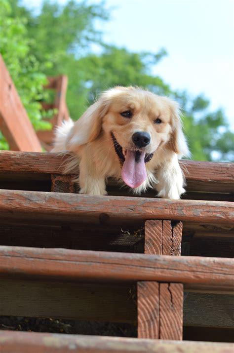stroke symptoms in dogs heat stroke symptoms stroke strokerehabilitation 点力图库