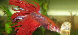 Exotic Tropical Fish I Exotic Freshwater Fish I Exotic Fish Facts