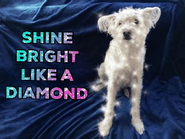Shine Bright Like A Diamond Meme - shine bright like a diamond gifs find share on giphy