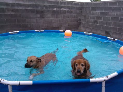 puppys playpen kansas city boarding overland park priarie 913 648 3647
