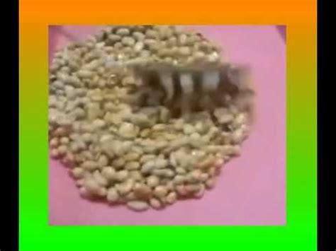 youtube membuat kacang telur resep membuat kacangtelur cara membuat kacang telur