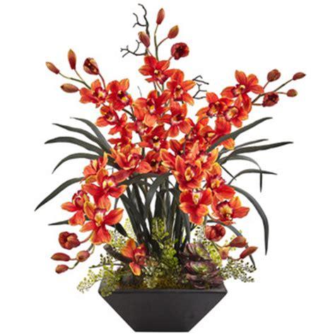 orchids species cymbidium