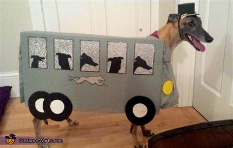 diy greyhound bus dog costume