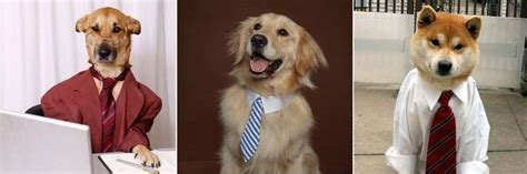 careers with dogs the top 11 for dogs breed and top pics