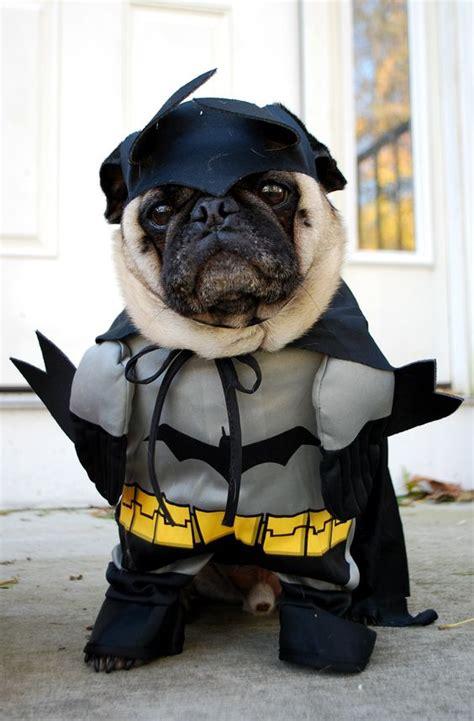 bat pug bat pug pugs pug and bats