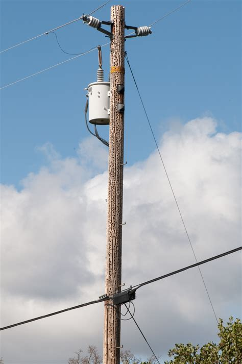 The Pole by Telephone Power Catv Poles