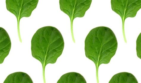 vegetables you should eat top 10 healthy green vegetables you should eat every day