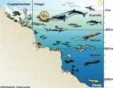 deparknow marine zone