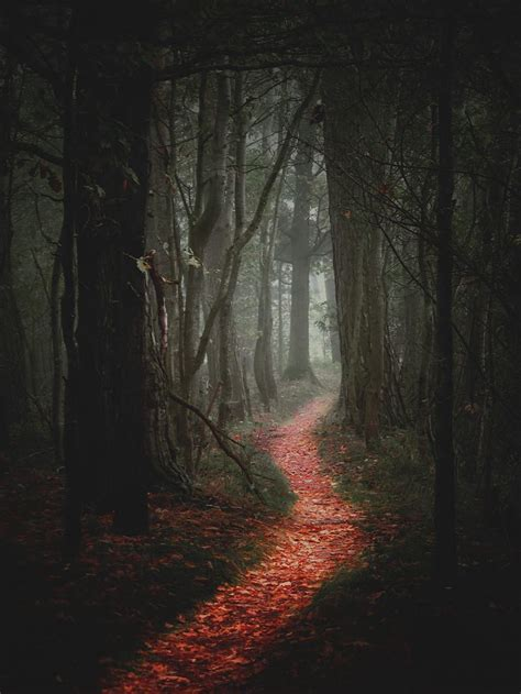 scary forest path bing images teacher picture prompts