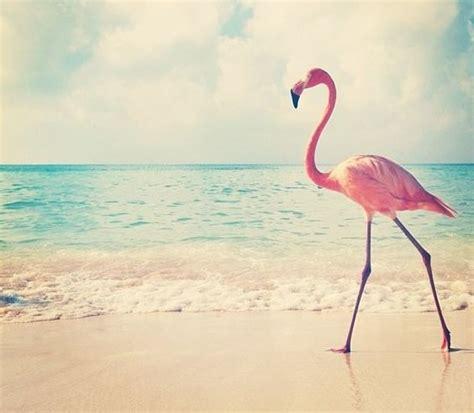 flamingo vans wallpaper et si on voyait la vie en flamant rose la fabrique 224