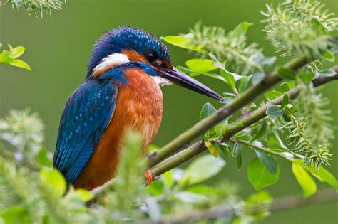 The Crawfish Barn The Kingfisher Bird Beauty Of Bird