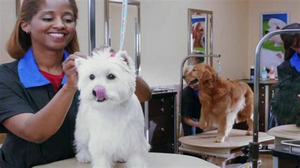 petsmart puppy grooming petsmart grooming tv spot ispot tv
