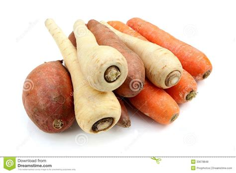 are sweet potatoes a root vegetable root vegetables royalty free stock photos image 33678848
