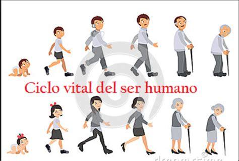 imageens del cilco de vida dels er humano para colorear ciclo vital del ser humano jimenez alma timeline
