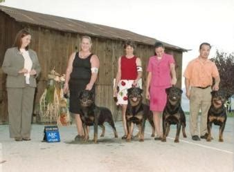 ironstone rottweilers h more working