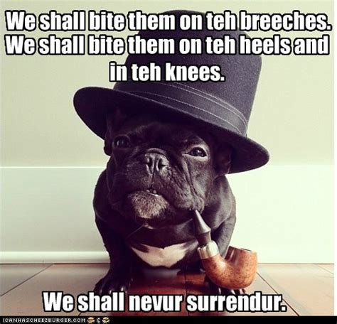 Funny French Memes - french bulldog memes image memes at relatably com