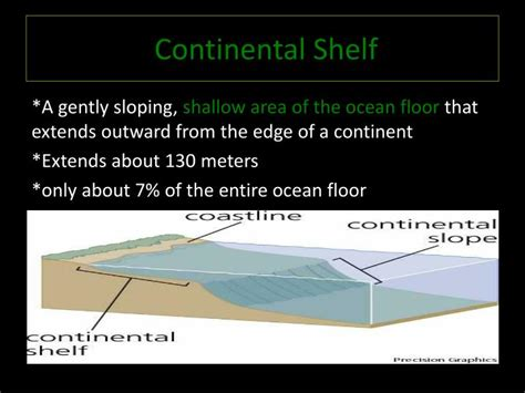 Continental Shelf Organisms by Ppt Features Of The Floor Powerpoint Presentation