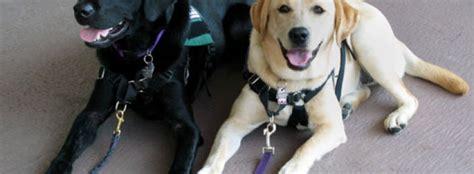 dogs best friend service dogs mans best friend
