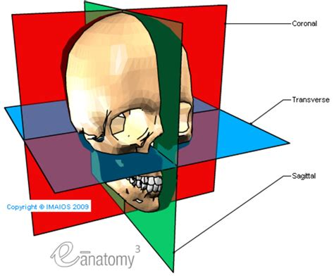 axial section planes and motions used in macroscopic anatomy