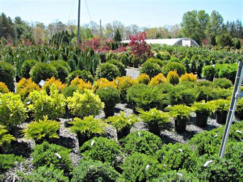 tree shops springfield nj garden supply rochester ny nursery smith s