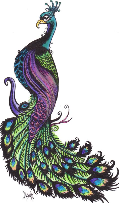 animals clipart peacock gallery free images cliparting com