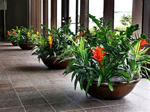 Interior Plantscaping by Interior Plantscapes Welcome To Green