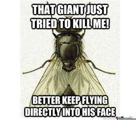 Fly Meme - fly meme pictures to pin on pinterest thepinsta