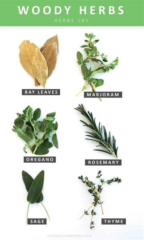 types of garden herbs fresh herbs 101