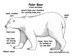 bear_polar_color_diagram150 telephone cable wiring diagram 17 on telephone cable wiring diagram