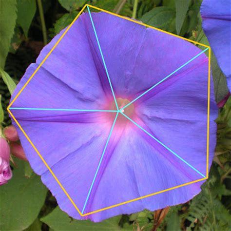 figuras geometricas naturales geometria en la naturaleza