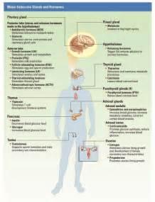 Unit 1 endocrine system reddingsap