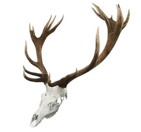deer skull tattoos lovetoknow deer skull tattoos lovetoknow