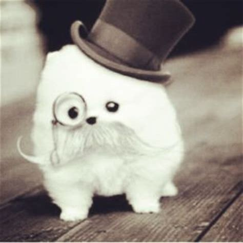 puppy with mustache puppy with a mustache and hat so mwah