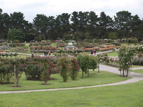 St Kilda Botanical Gardens Remnant Gleaning A Rosy Ponte