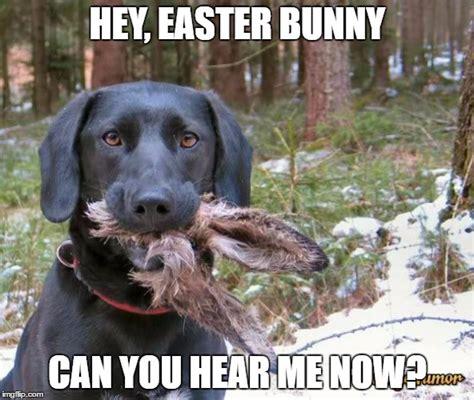 Easter Bunny Meme - dead easter bunny meme www pixshark com images
