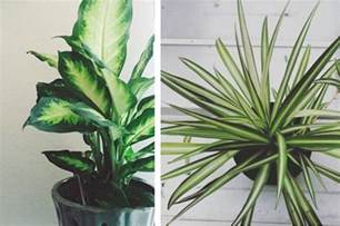 House Plants 15 beautiful house plants that can actually purify your home