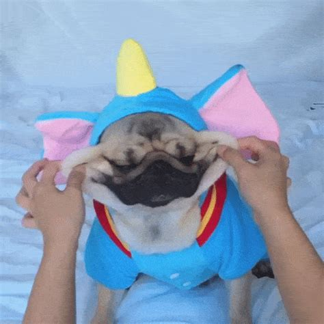 pug in unicorn costume pug costumes 2017 pug jokes