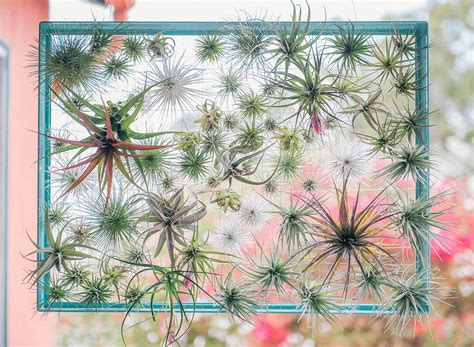 Log Home Decorating Tips air plant display ideas and care tips small garden ideas