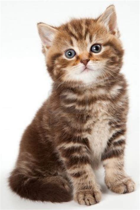 google images kittens imgur needs more kittens courtesy of google images